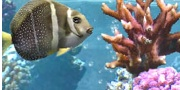 Save on Aquarium tickets