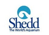 How to Use Shedd Aquarium Coupons Shedd Aquarium is a popular tourist attraction in Chicago. You can buy tickets and memberships via their official website. When promotional offers and coupon codes are available for those items, you will find them on their official website as well.
